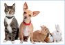 LOW-COST SPAYING & NEUTERING PROGRAMS IN BROWARD COUNTY, FL